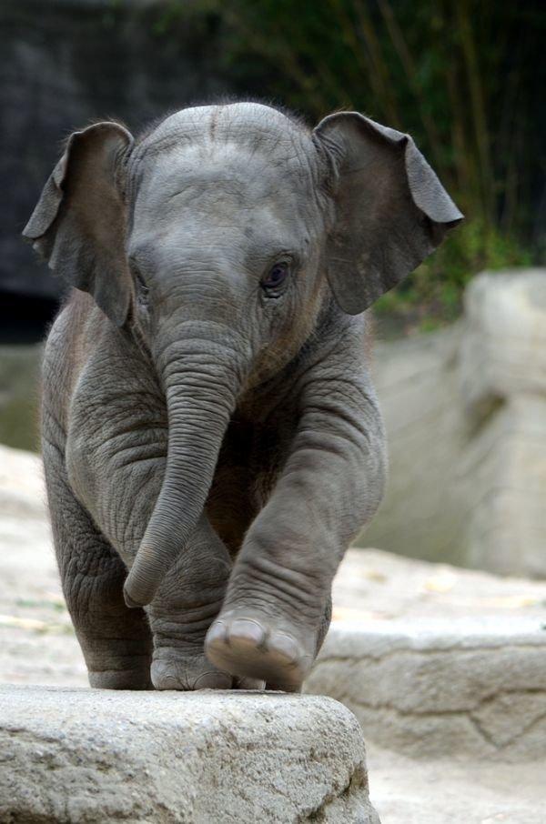 Картинки, картинки с прикольными слониками