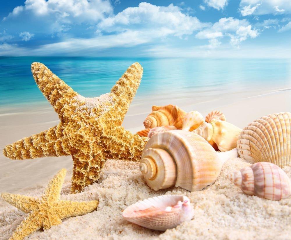 Картинки с ракушками и морскими, надписью про юлю
