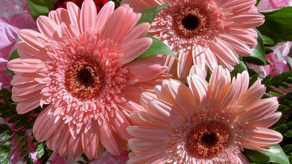 Картинки цветы в хорошем