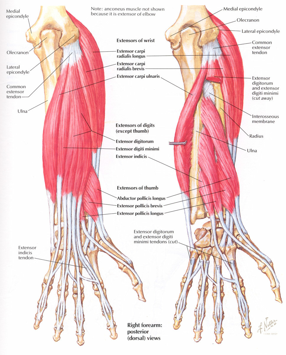 фотон обладает строение мышц руки картинка красивые