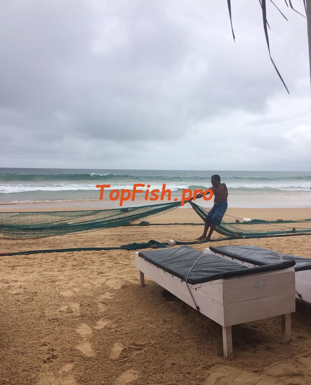 активатор клева голодная рыба fish hungry отзывы