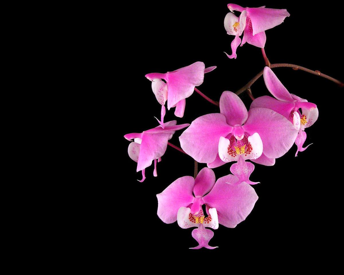 Рисунок зимой, открытки с орхидеями девушке