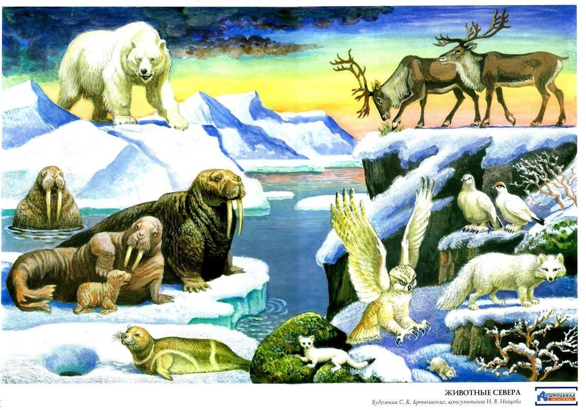 животные севера с картинками плакаты
