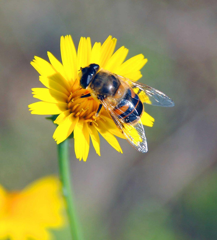 Картинки цветы с пчелами