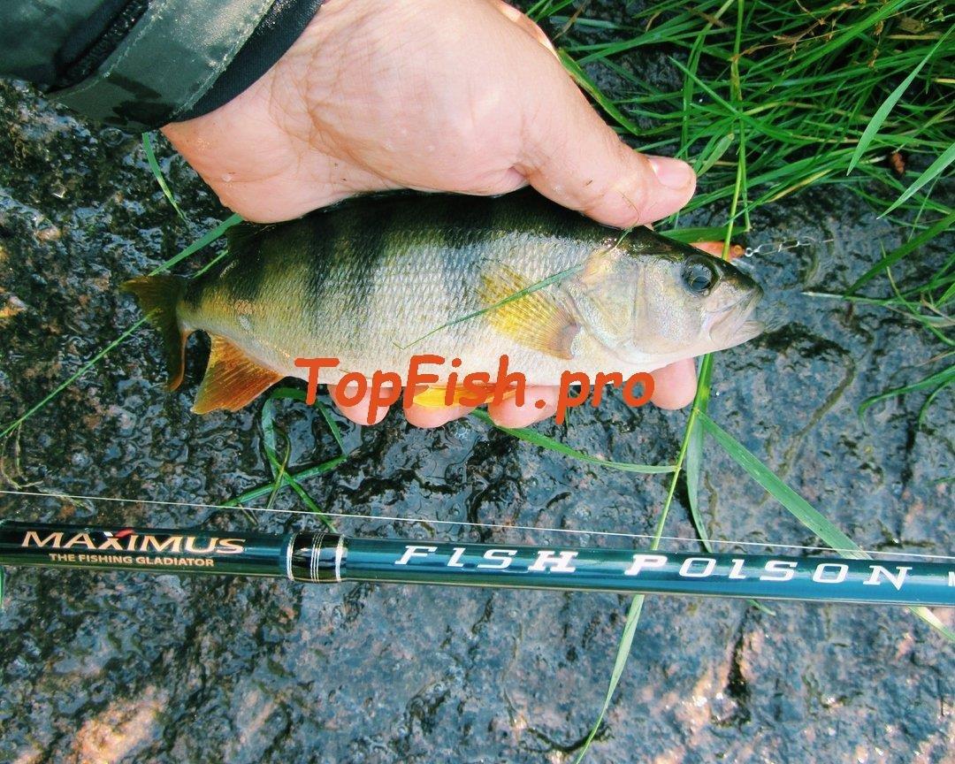 активатор клева fish hungry инструкция