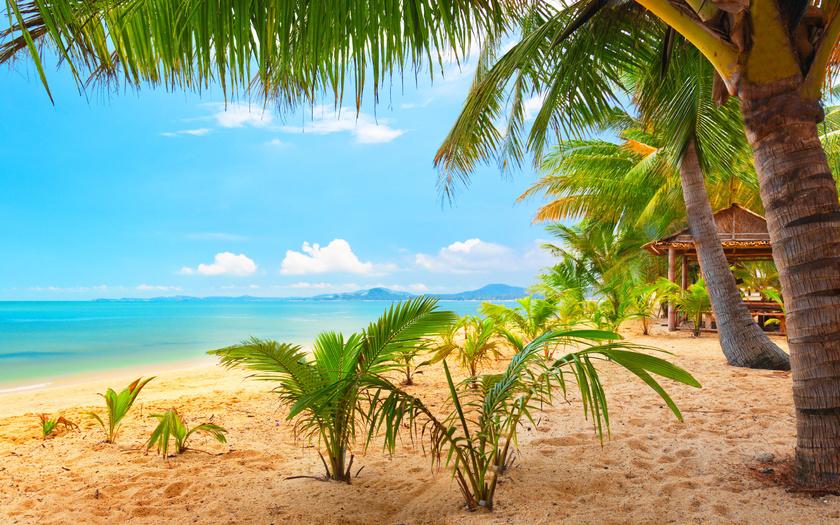 солнце море пальмы фото