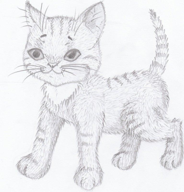 Срисовать картинки котики