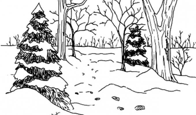 Зимний лес картинка раскраска для детей