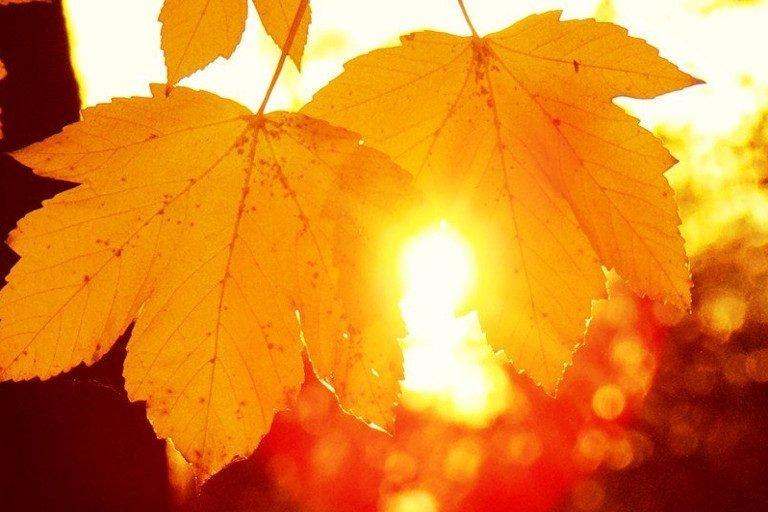 Картинки, открытки осень солнце
