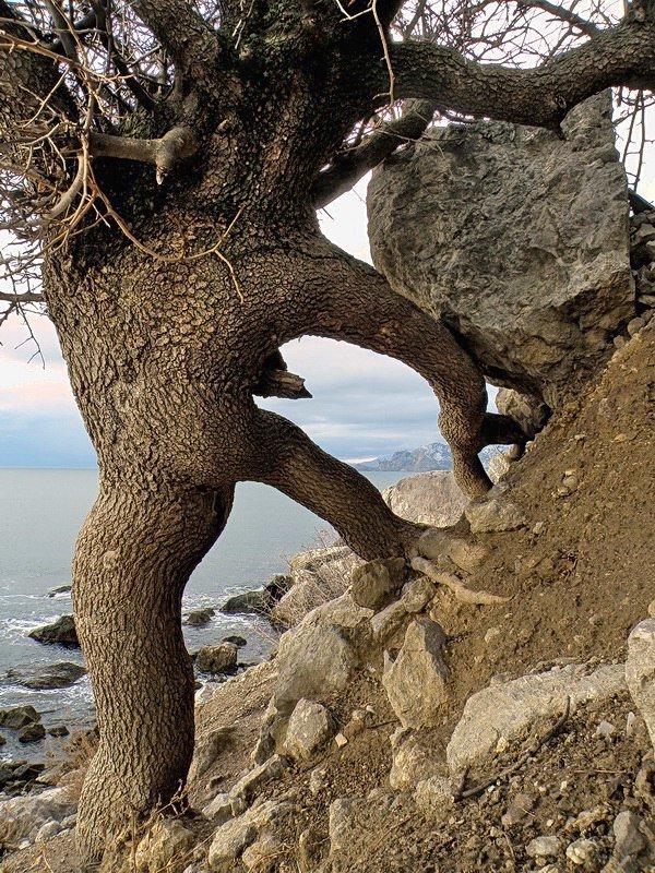 Причудливые формы природы Крыма.