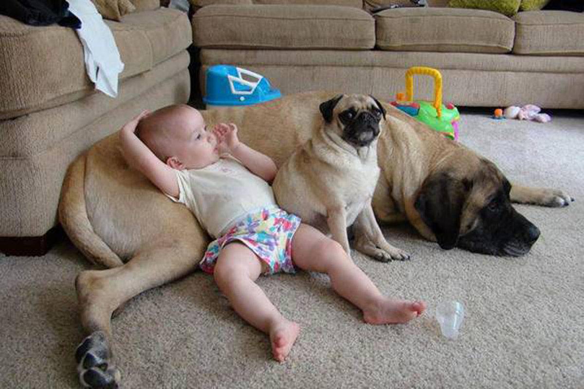 Смотреть смешные картинки про собак до слез, открытки днем рождения