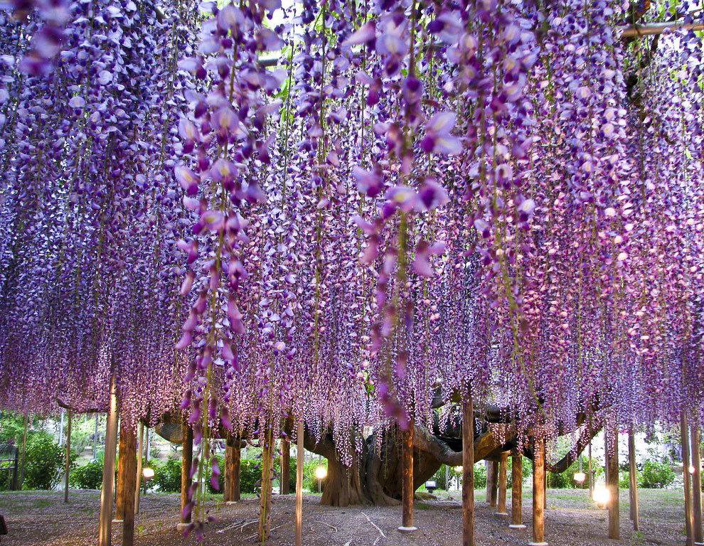 Самые красивые растения мира фото с названиями, днем