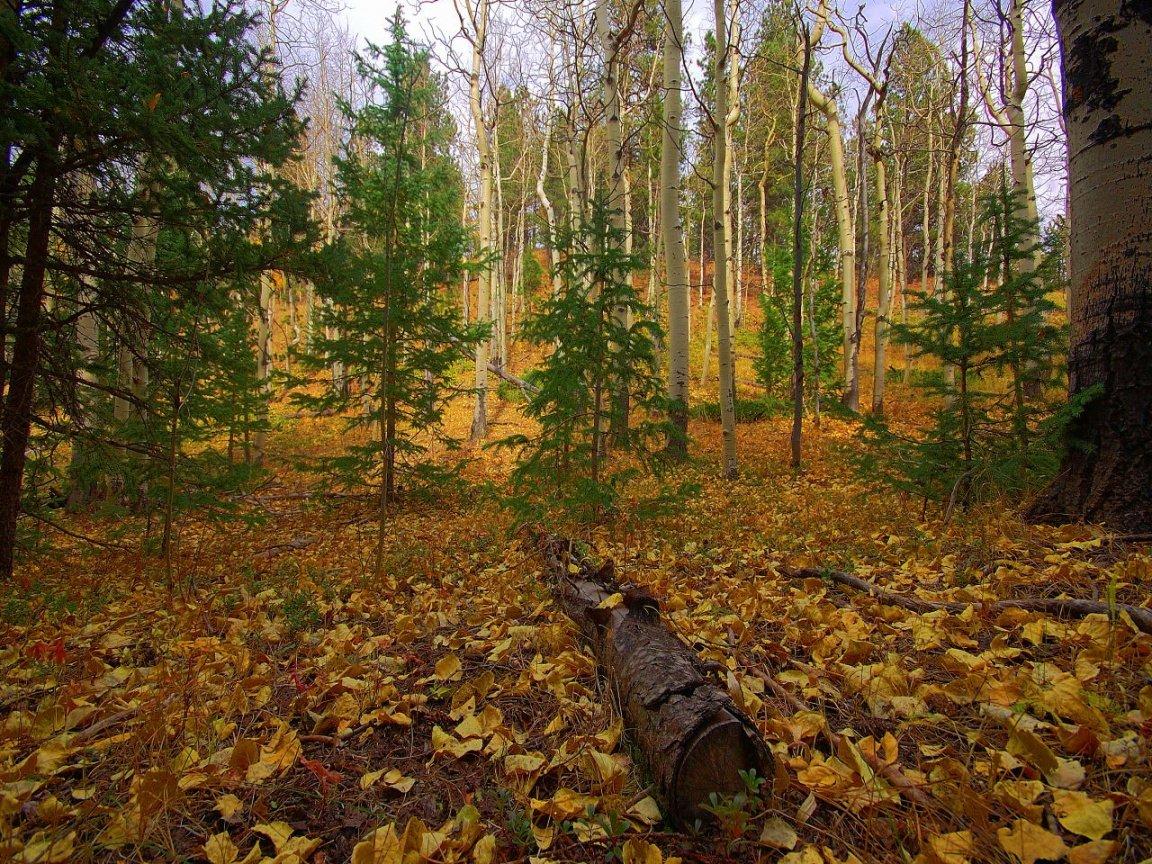 Большое спасибо, картинки осеннего леса для детей