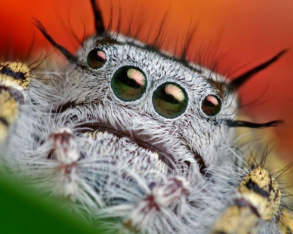 Картинка паук прикол, открыток любимому