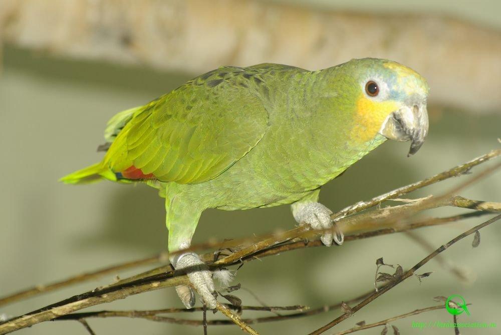 должны хорошо фото венесуэльского попугая избавиться тли