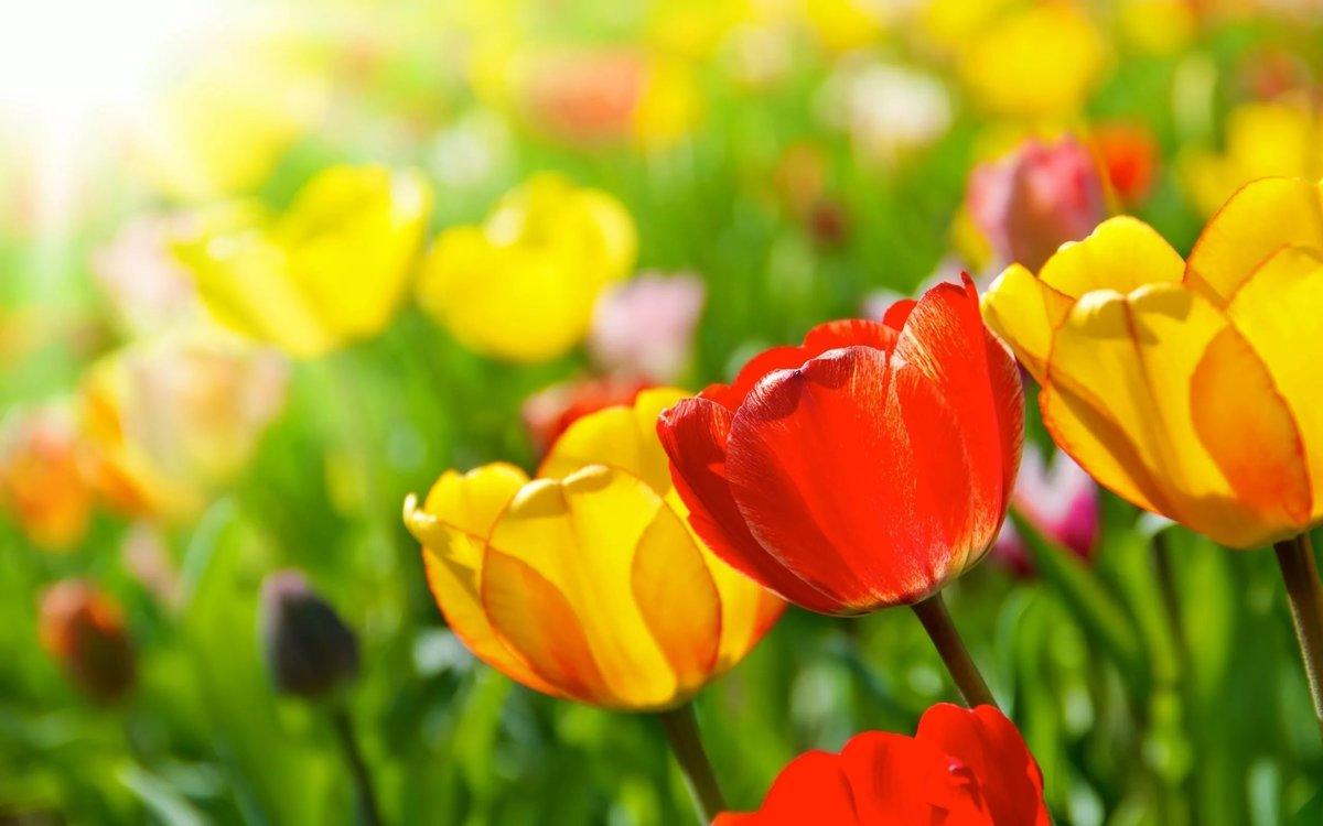 Картинки с весенними цветами, днем летия