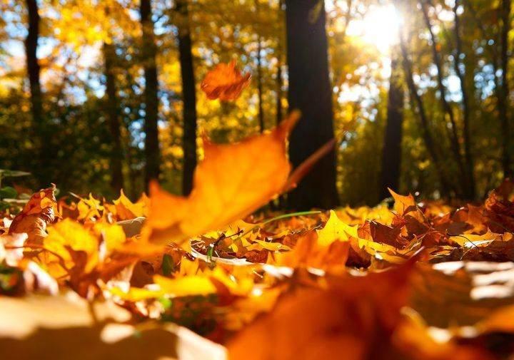 Осень – пора волшебства и неожиданных поворотов судьбы.