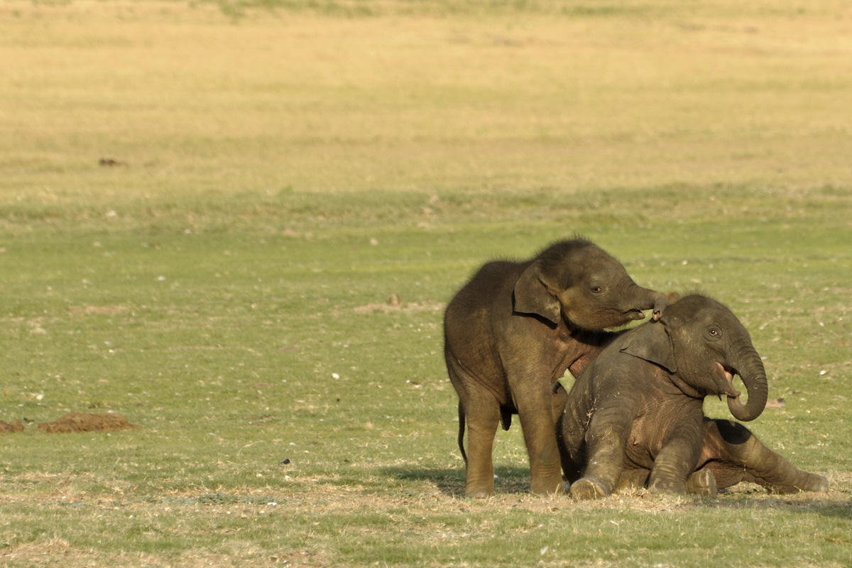 Маленькие очаровательные слонята