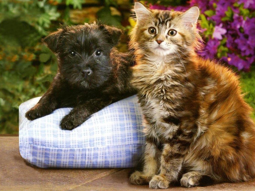 Картинки милые котята и щенки картинки