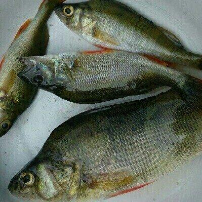 fishhungry купить в екатеринбурге