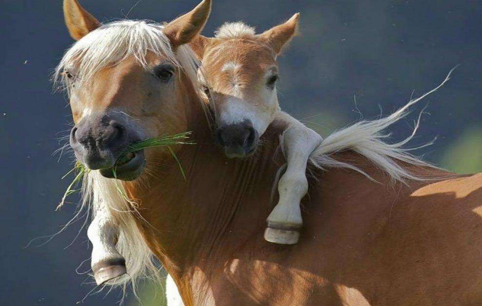 Цветок, картинки с добрым утром и хорошего дня прикольные с лошадками