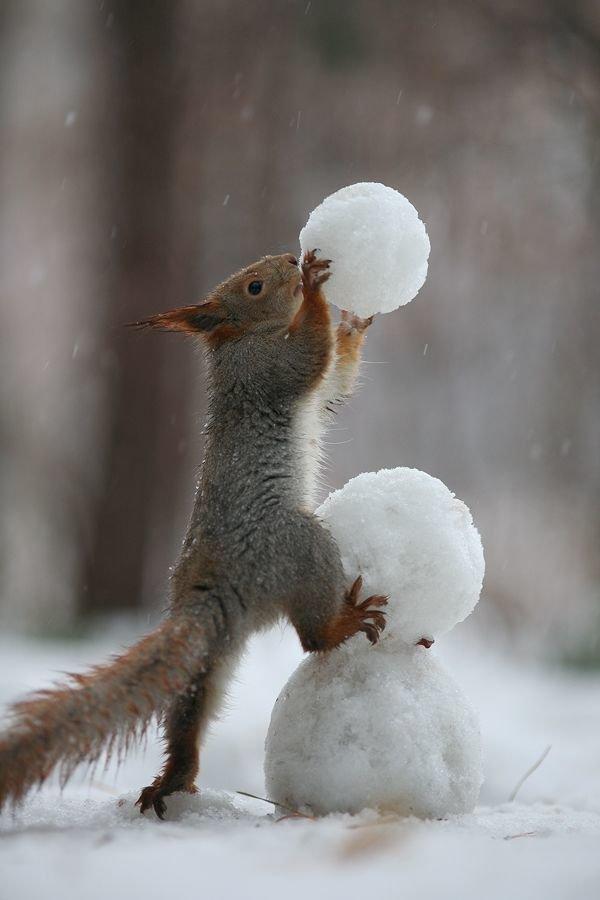 Белка с шариками из снега.