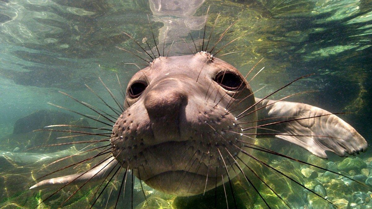 картинки картинки про подводных животных наиболее модных считается