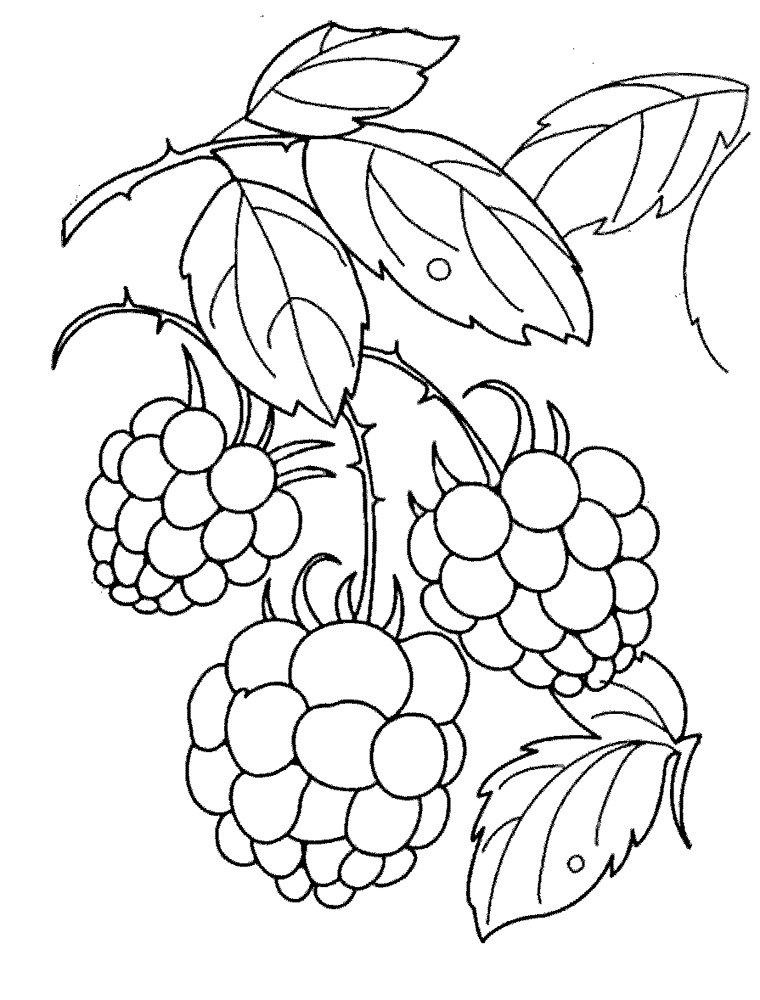 Рисунки лесных ягод карандашом