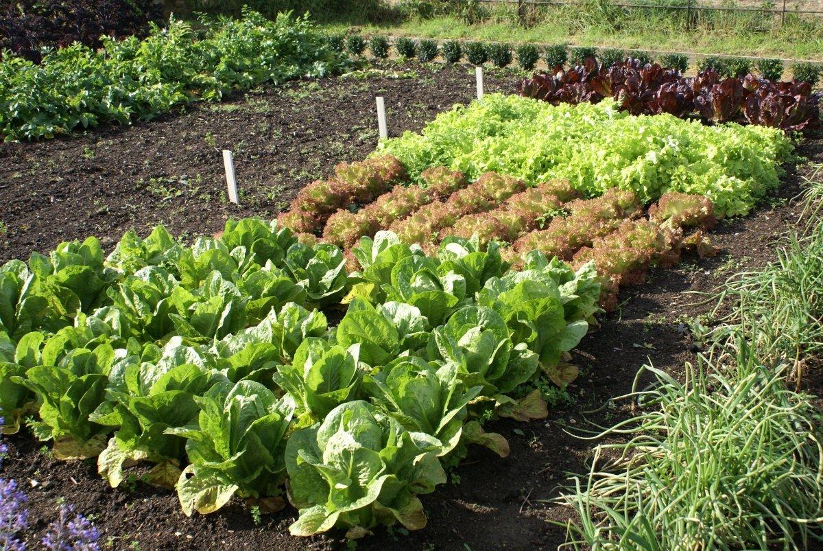 как садить овощи в огороде