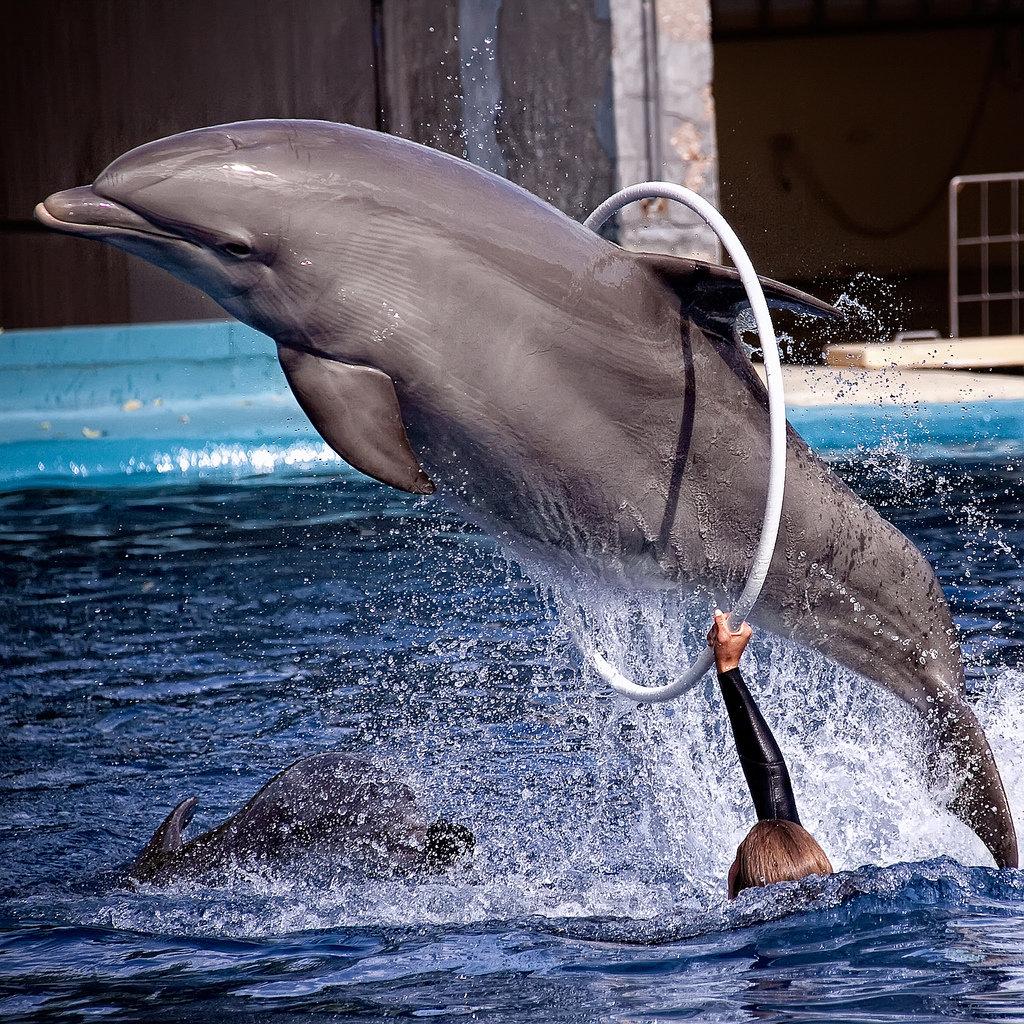 центр нашей фото разновидности дельфинов лекала шаблоны, предназначенные