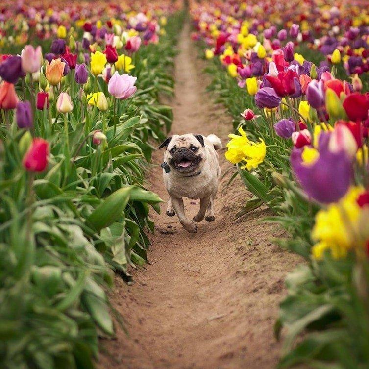 Смешная картинка весна идет