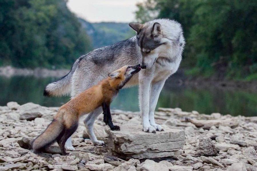 Картинки с прикольными волками, смешную картинку картинки