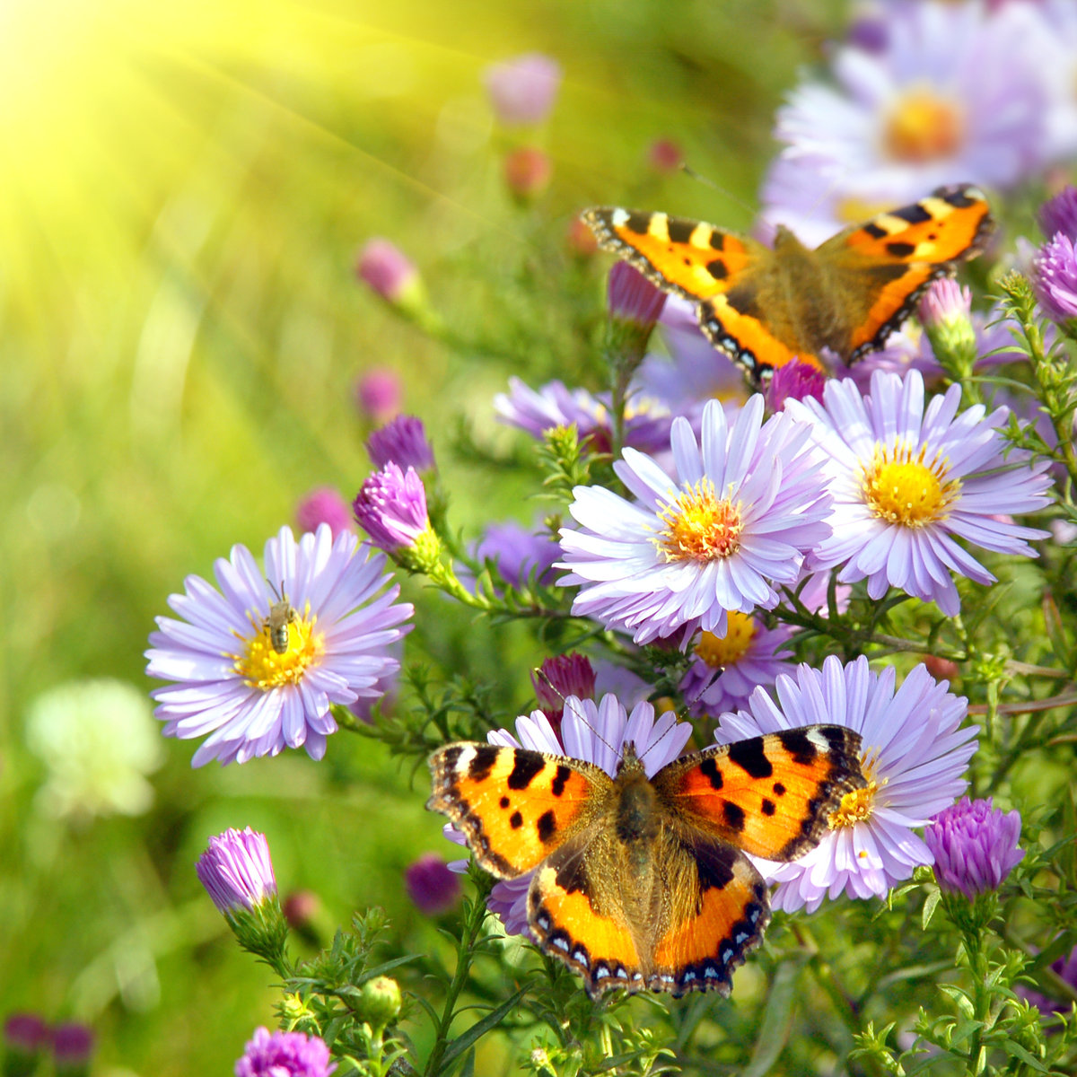 Бабушка дедушкой, лето картинки цветы бабочки