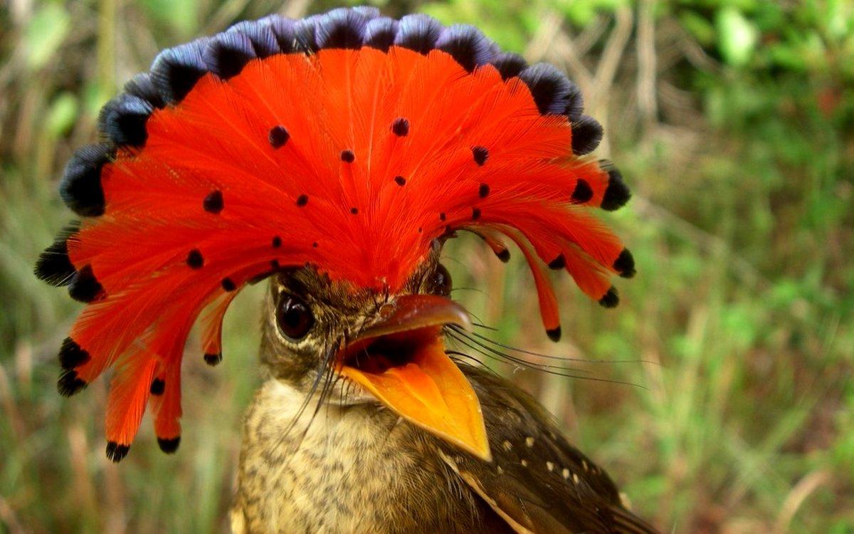 Заморская птица картинки
