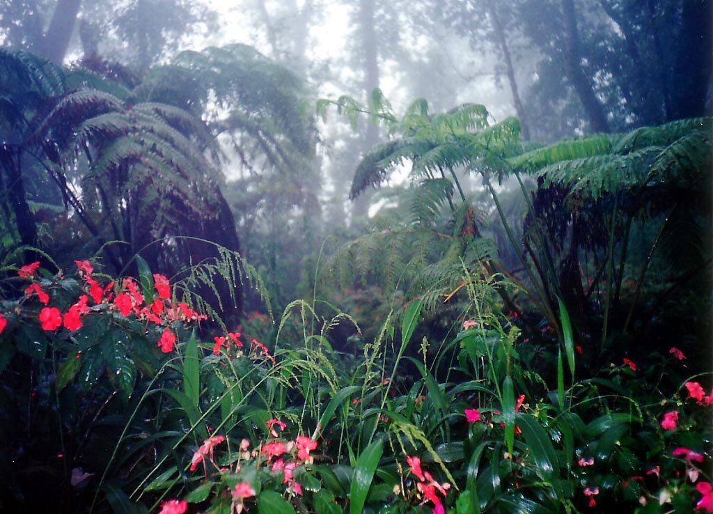 только картинка тропического леса с цветами леса этом