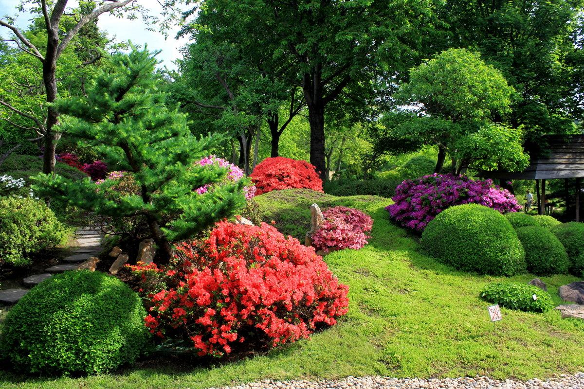 смотреть фото красивых цветников и садов мясо говядина