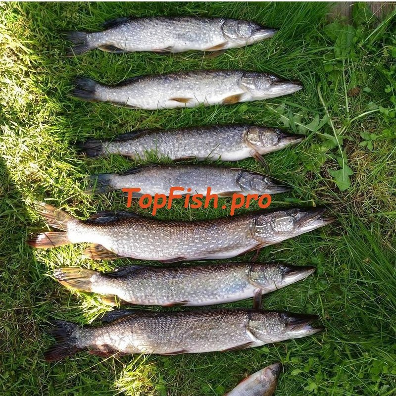 Активатор клёва fishhungry голодная рыба отзывы и видео