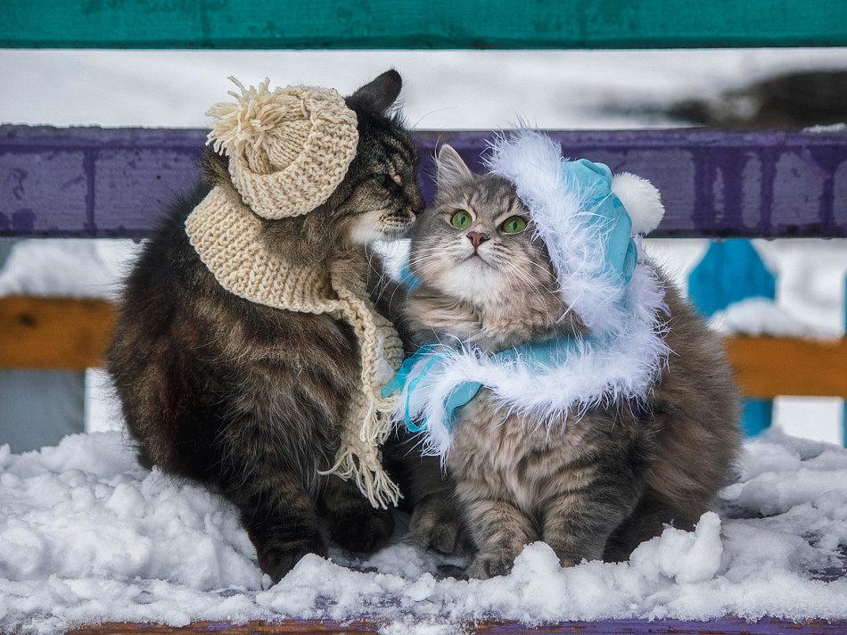 Мемы картинки, открытки одевайся теплее котята