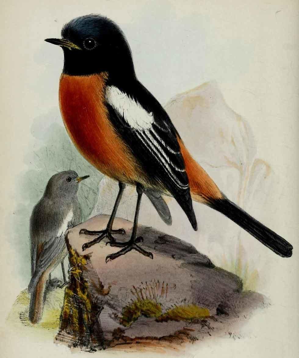 множество коллекция картинок птиц издавна