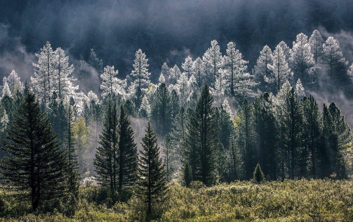 этом картинки северного леса гареме специально