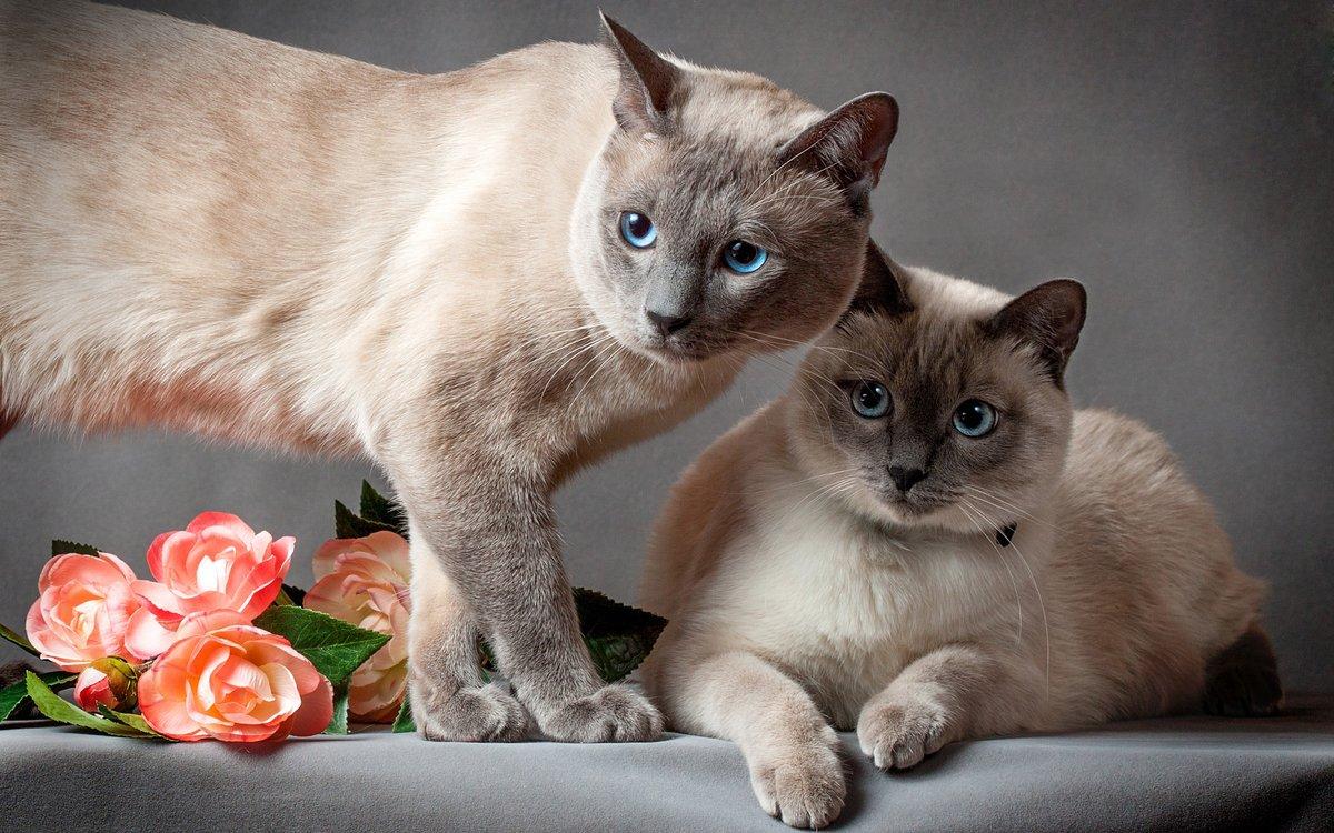 Красивые картинки и фотографии кошек