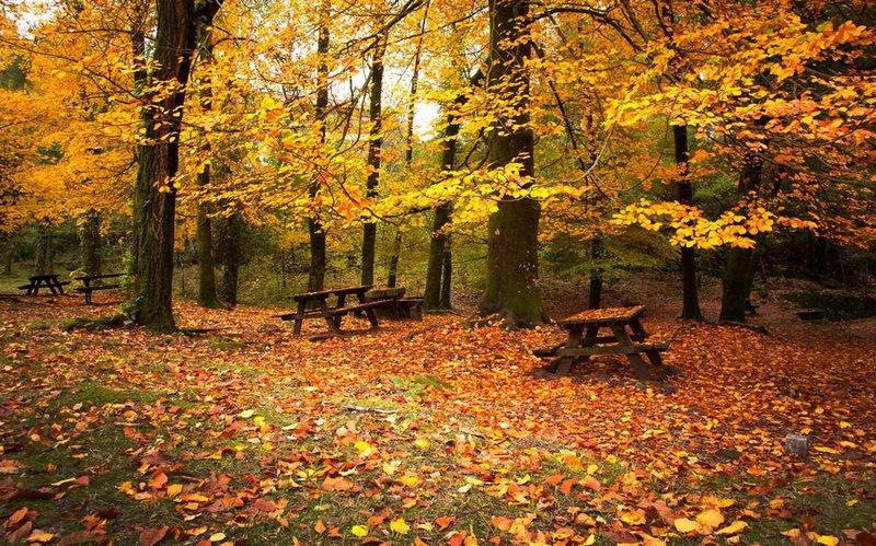 Лавочки для отдыха в осеннем парке усыпанном золотыми листьями