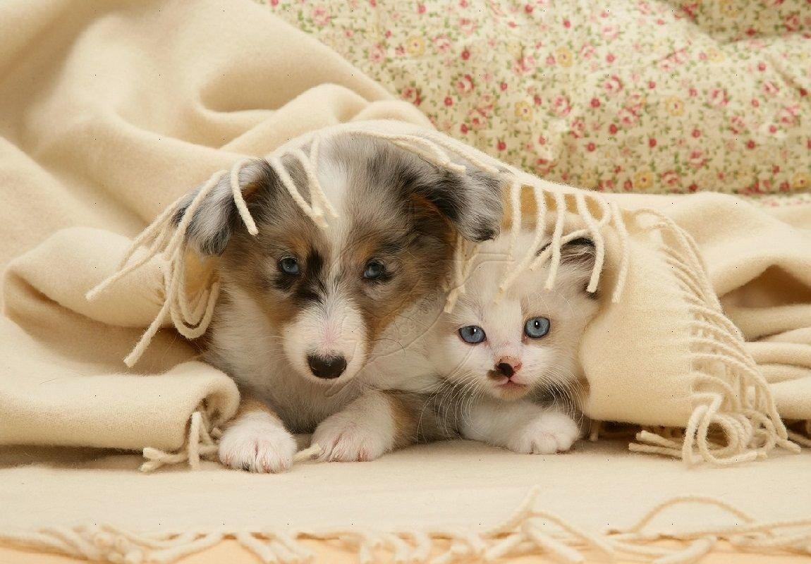 Картинки собачки котятки