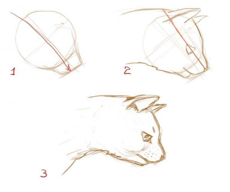 Как нарисовать реалистичную кошку поэтапно