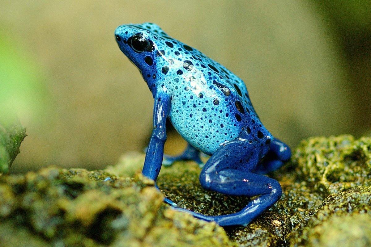картинки голубых лягушек годы работы поняла