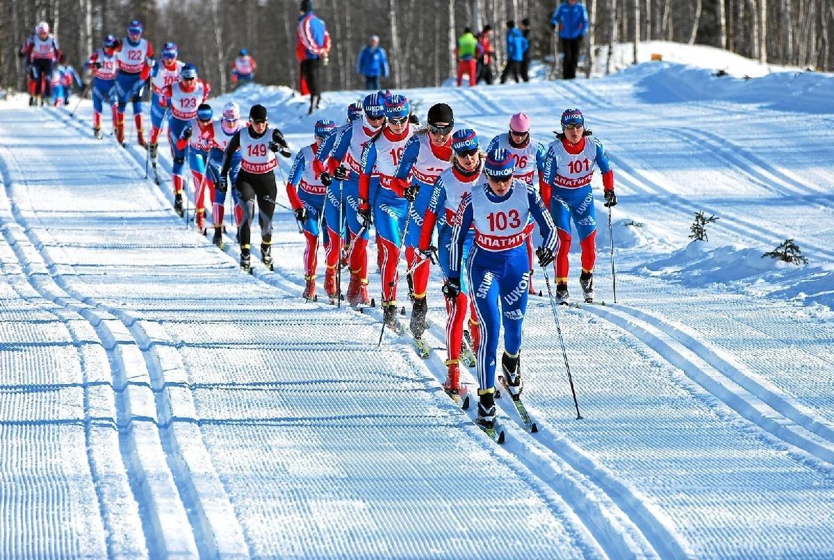 лыжные спорт фото птичьи кормушки