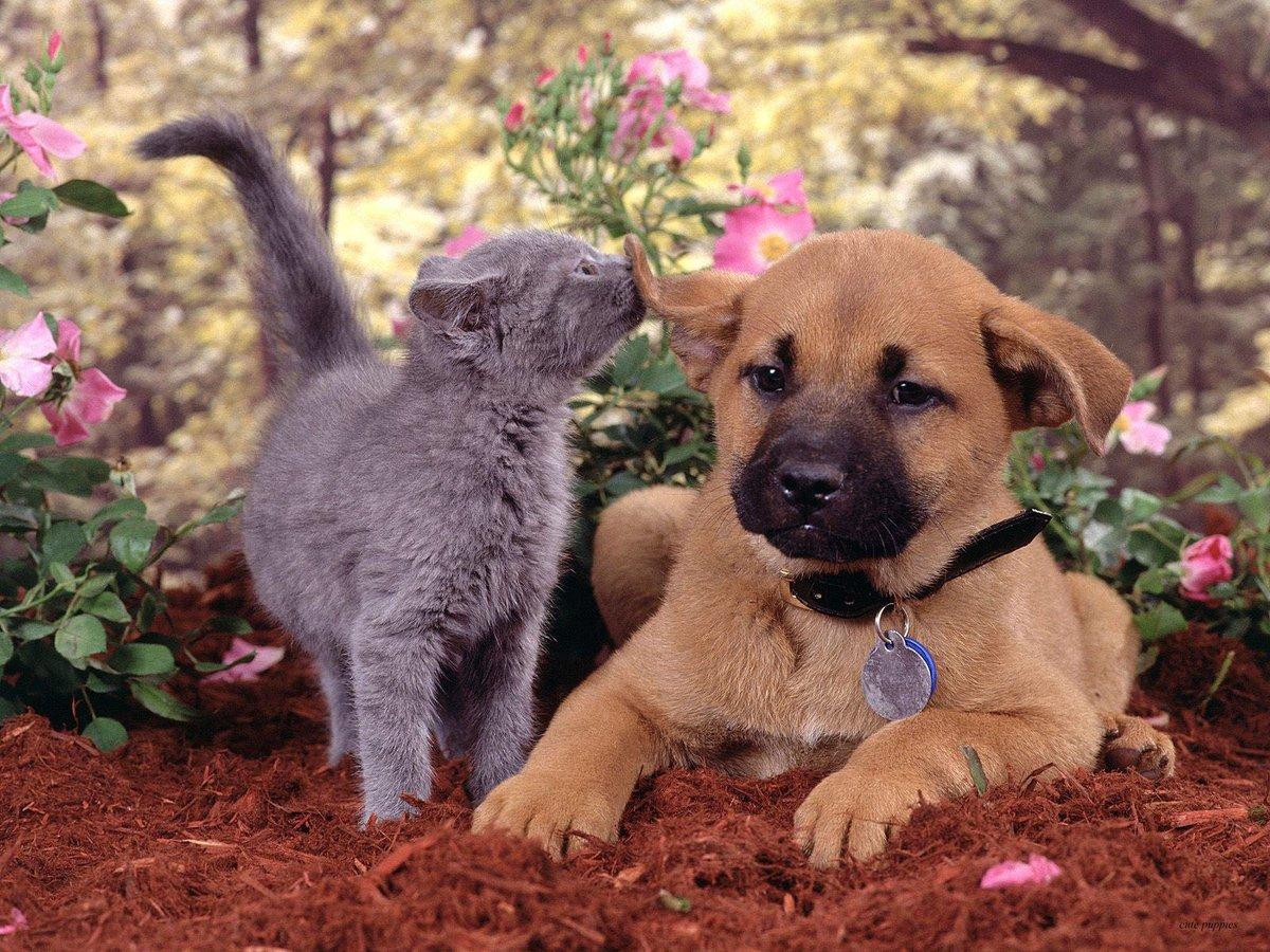 Картинки с кошками собачками, поздравления летием