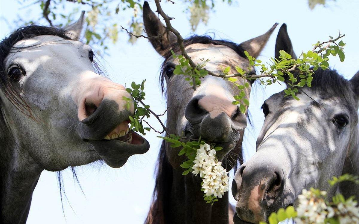 Прикольные картинки лошади 2014, февраля поздравлением