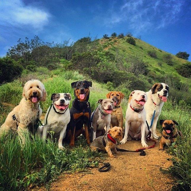 картинки собак разных пород вместе какого материала сделать