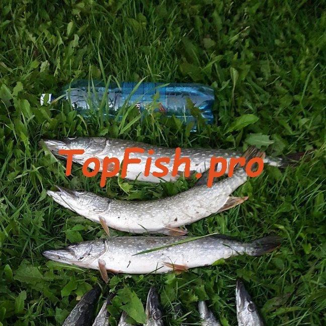 Активатор клёва fishhungry развод или нет форум